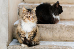 Two cats wait for master outdoor Stock Photos