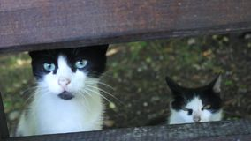 Two cats waiting for food. At the fence stock footage