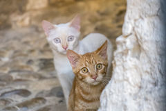 Two cats watching intently. Scared Stock Images