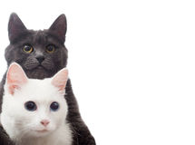 Two cats. On a white background isolated Stock Image