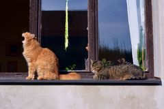 Two cats at the window Royalty Free Stock Photo