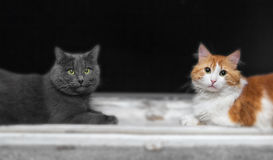 Two cats on window Stock Image