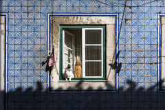 Two cats at a window in an old building in the traditional Bica neighborhood in Lisbon Royalty Free Stock Photography