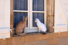 Two Cats on the Window Sill Royalty Free Stock Photography