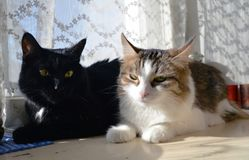 Two cats on a window in the sunlight stock images