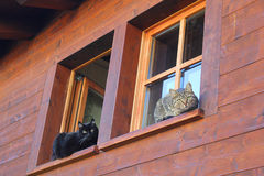 Two cats on the windows Royalty Free Stock Image