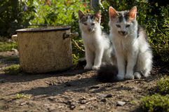 Two cats in the yard. Near a large pot Stock Image