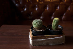 Two Catus on wood table Royalty Free Stock Photography