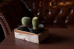 Two Catus on wood table Royalty Free Stock Image
