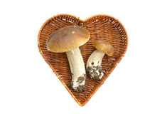 Two cep mushroom in heart form basket isolated Stock Photos