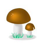 Two cepes with a grass. On a white background Stock Photos
