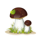 Two ceps isolated on a white background Stock Photo