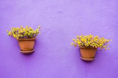 Two ceramic pots with flowers Royalty Free Stock Images