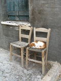 Two chairs and one cat Royalty Free Stock Photo