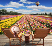 Two chaise-longue standing on wooden platform. Great multi-colored balloon flies over flower field. Israeli kibbutz on the border with Gaza Strip. Two chaise stock photography