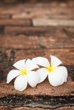 Two champa (plumeria) flowers. Delicate white champa (plumeria) spa flowers on rough stone surface Stock Photos