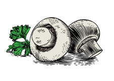 Two champignons with parsley. Drawing of two field mushrooms with parsley on the white background Stock Photography