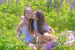 Two charming young girls with long hair on the field with lupins. Teen girl kisses her friend. Girlfriends, the concept stock photography