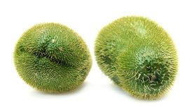 Two Chayote Squash Stock Photography