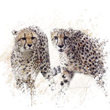 Two Cheetahs Watercolor Stock Image