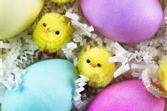 Two Chenille Chicks. And colorful Easter eggs Stock Photo