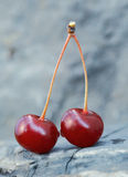 Two Cherries. Royalty Free Stock Photos