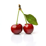 Two Cherries. With Dewdrops On White Background Royalty Free Stock Images