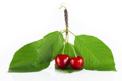 Two cherries Stock Image