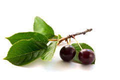 Two cherries Royalty Free Stock Photography