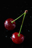 Two Cherries Royalty Free Stock Photo