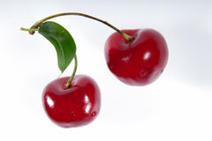 Two cherries on a branch. Royalty Free Stock Image