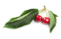 Two Cherries and branch with leaves Stock Photography