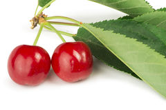 Two Cherries and branch with leaves Royalty Free Stock Photography