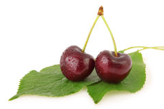 Two cherries with dew drops on leaves. Isolated Stock Image
