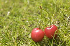 Two cherries in grass Royalty Free Stock Photo