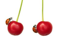 Two cherries with ladybug Royalty Free Stock Photo