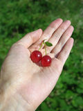 Two cherries on woman's palm Royalty Free Stock Photo