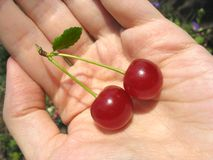 Two cherries on woman's palm royalty free stock image