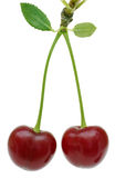 Two cherry fruit on white. Stock Photos