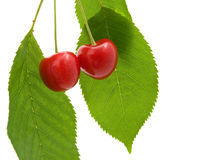 Two cherry with a green leaf Stock Photo