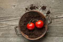 Two cherry tomato on ground Royalty Free Stock Photography