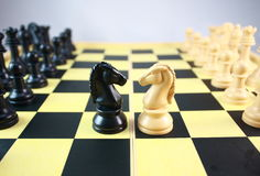 Two chess horse Stock Image