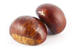 Two chestnut Royalty Free Stock Photo