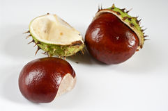 Two chestnuts. On white background Royalty Free Stock Image