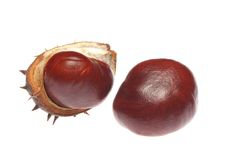 Two chestnuts Royalty Free Stock Image