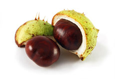 Two chestnuts Stock Photos