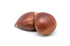 Two chestnuts Stock Photography