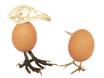 Two chicken eggs as birds with beaks, skull and legs Royalty Free Stock Images