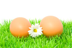 Two chicken eggs on grass Royalty Free Stock Photography