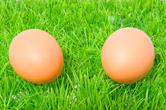 Two chicken eggs on grass Stock Image